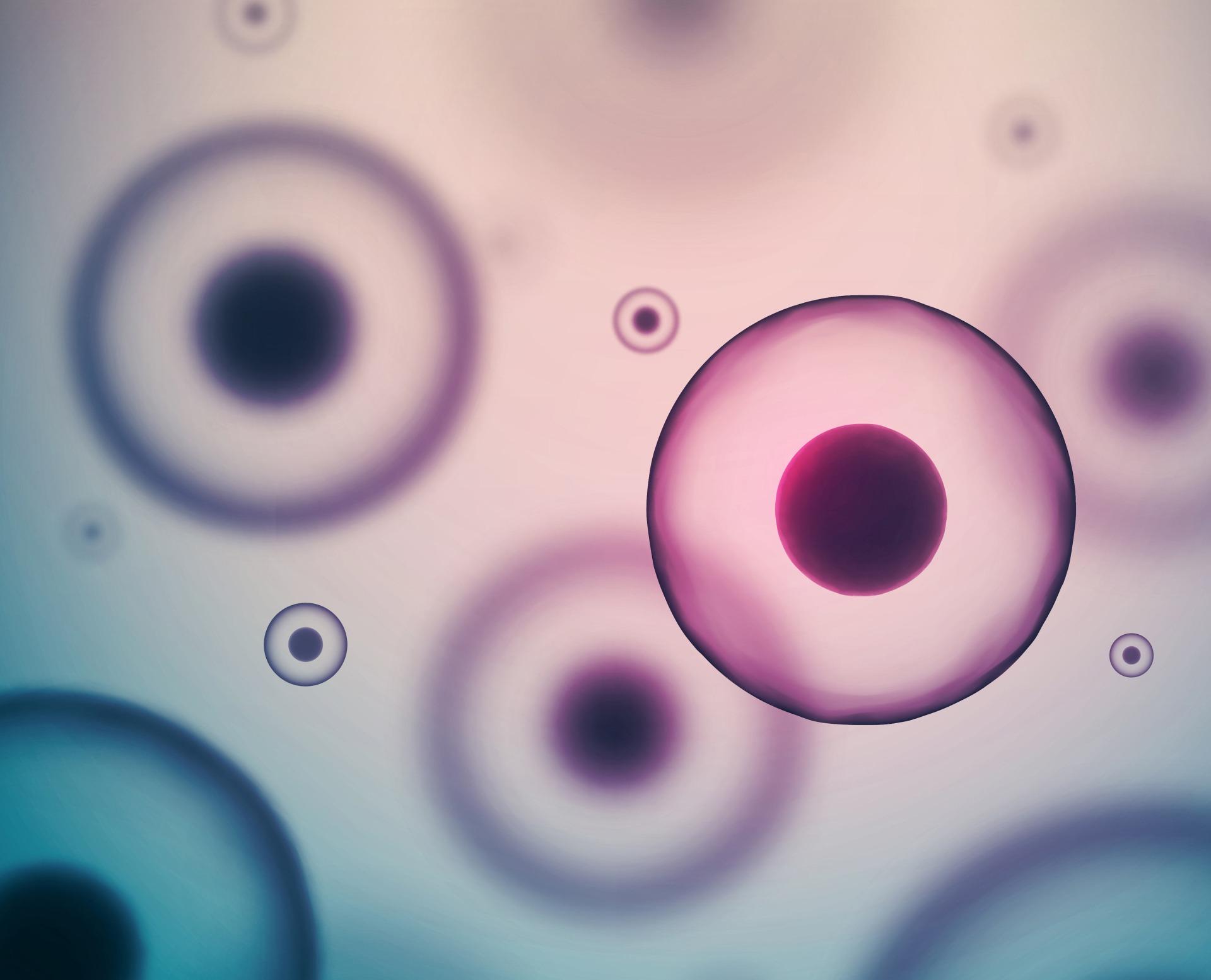 banco-de-embriones-cádiz-clinica-medrano